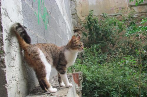 Article : Le chat du voisin me rappelle…