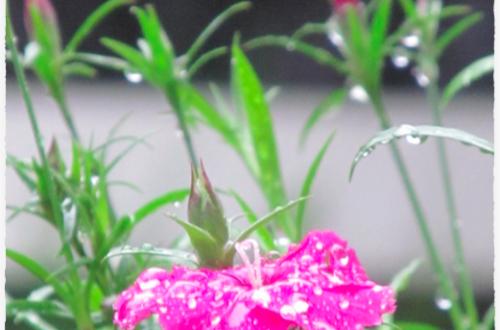 Article : la pluie tombe enfin 💧💦